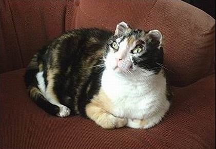 Кошка Скарлетт