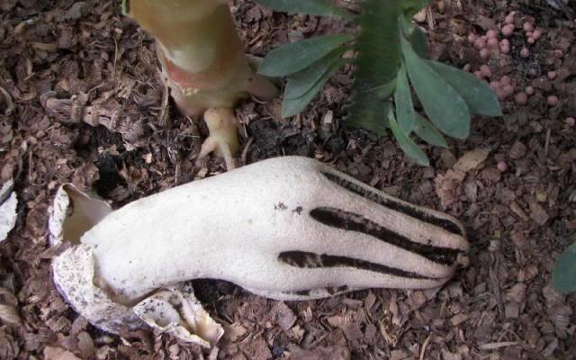 Пальцы дьявола