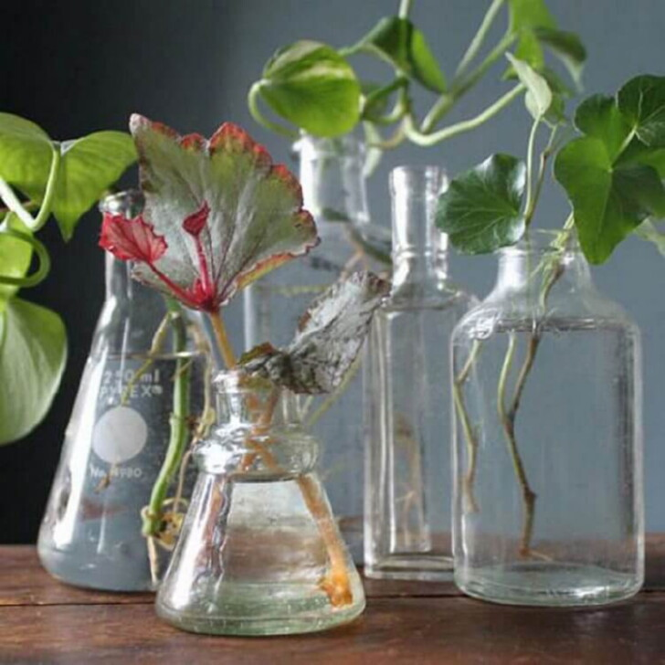Одна таблетка вечером - и цветы будут вас радовать целый год!