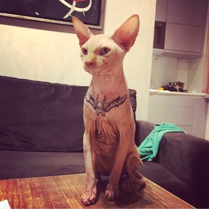 Фитнес-модель сделала татуировку своему коту, тем самым спровоцировав шквал критики в соцсетях